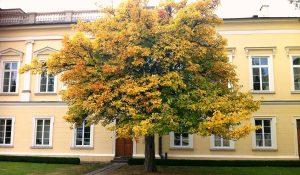 drzewo_palac